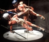 Body_Worlds_and_The_Cycle_of_Life